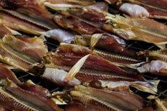 Сухие рыбы на сети Стоковые Фотографии RF