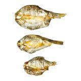 Сухие рыбы от солнца на белой предпосылке Стоковое фото RF