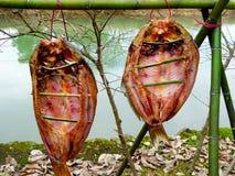 сухие рыбы посолили Стоковое фото RF