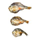 Сухие рыбы с солнечным на белой предпосылке Стоковое фото RF