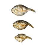 Сухие рыбы с солнечным на белой предпосылке Стоковое Изображение