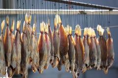 сухие рыбы стоковые изображения rf
