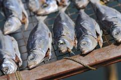 сухие рыбы Стоковое Изображение