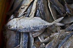 сухие рыбы Стоковые Изображения