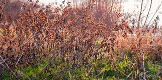 сухие семена Стоковая Фотография