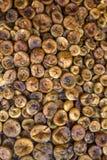 сухие смоквы Стоковые Изображения RF