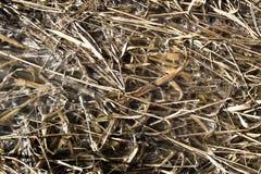 Сухие травы в солнечности Стоковые Изображения RF