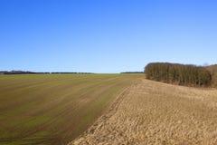 Сухие травы и урожай пшеницы Стоковые Изображения RF