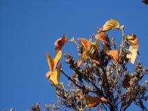 Сухие травы против sunlit голубого неба стоковые фото