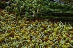 сухие травы Стоковое фото RF
