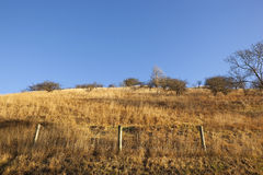 Сухие травянистые горные склоны Стоковое Изображение RF