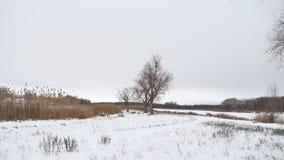 Сухие тростники дерева и травы на реке в ландшафте снега зимы Стоковое Фото