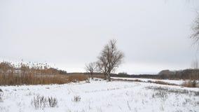 Сухие тростники дерева и травы на реке в ландшафте снега зимы Стоковые Фото