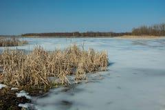 Сухие тростники на береге замороженного озера Горизонт и голубое небо стоковая фотография