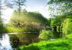 Сухие тростники на реке стоковые изображения rf