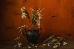 Сухие тюльпаны в натюрморте вазы металла Стоковые Изображения