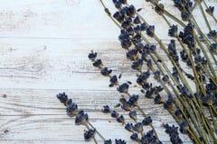 Сухие хворостины лаванды Стоковые Фото