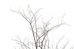 Сухие хворостины Стоковые Фото