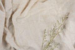 Сухие цветки на коричневой ткани для средств массовой информации работают Стоковое Фото