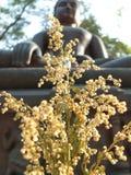 Сухие цветки для уважения Будды Стоковые Фотографии RF