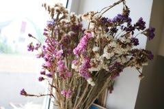 сухие цветки стоковые фотографии rf