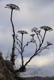 сухие цветки Стоковое Фото