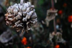 сухие цветки Стоковые Изображения RF