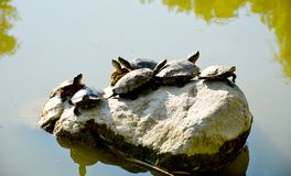 сухие черепахи утеса группы стоковая фотография