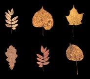 6 сухих листьев осени Стоковое Фото
