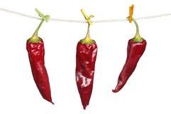3 сухих перца красных chili Стоковые Фото