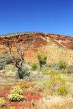Сухое австралийское захолустье, западная Австралия Стоковая Фотография RF