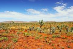 Сухое австралийское захолустье, западная Австралия Стоковые Изображения RF