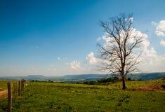 Сухое дерево в поле стоковые фото