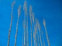 Сухое дерево в холоде Стоковая Фотография