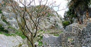 Сухое дерево около загубленной стены стоковая фотография rf