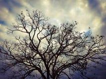 Сухое дерево с темными цветами, небо с интенсивными цветами стоковое фото
