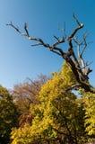 Сухое дерево Стоковая Фотография