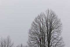 Сухое дерево в тумане Стоковые Изображения RF
