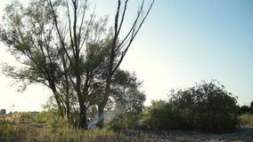 Сухое дерево падая во время вносить в журнал на лесе видеоматериал