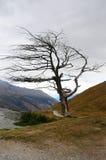 Сухое дерево Стоковая Фотография RF