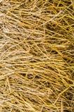 Сухое изображение крупного плана сена Стоковая Фотография