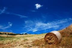 сухое лето Стоковая Фотография RF