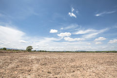 Сухое поле рисовых полей после сбора с предпосылкой голубого неба в солнечном свете после полудня писать Таиланд Стоковое Изображение