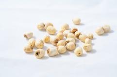 Сухое семя лотоса стоковая фотография rf
