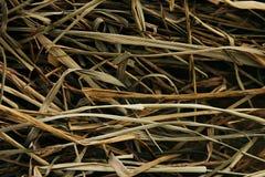 Сухое сено Стержни зелень gentile предпосылки абстракции Стоковая Фотография