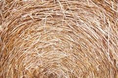 Сухое сено Стоковое фото RF