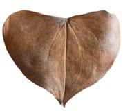 Сухое сформированное сердце лист Стоковое Фото