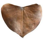 Сухое сформированное сердце лист Стоковая Фотография RF
