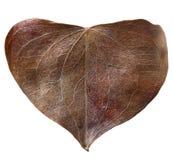 Сухое сформированное сердце лист Стоковые Изображения