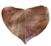 Сухое сформированное сердце лист Стоковые Фото
